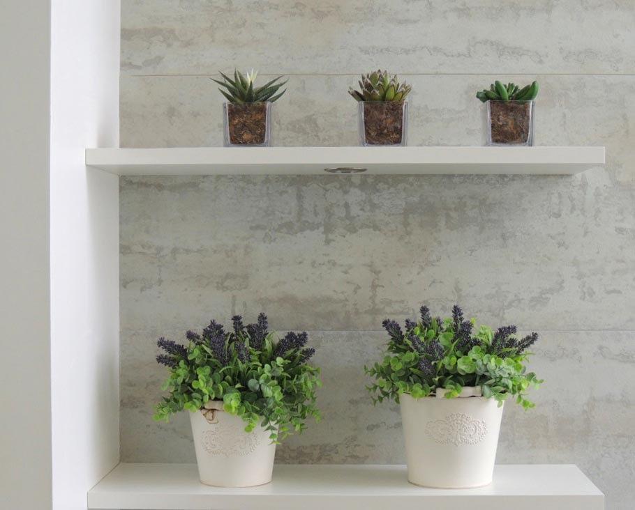 Plantas e decoração